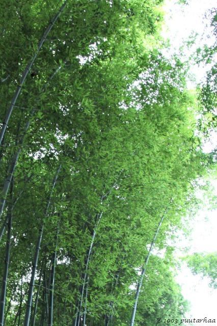 bambumetsa