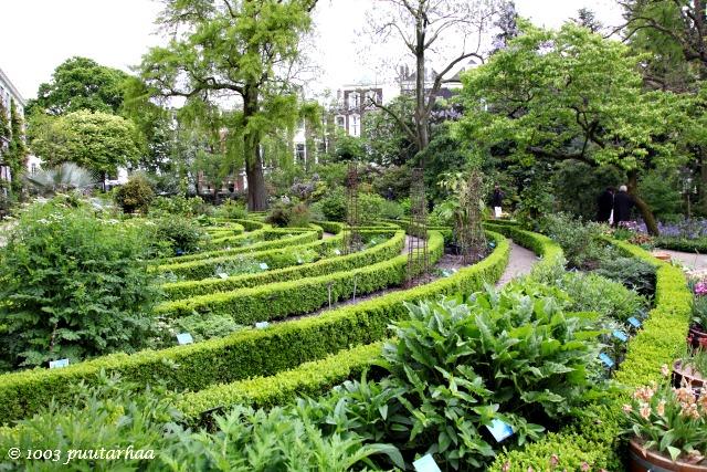 Amsterdamin kasvitieteellinen puutarha 2
