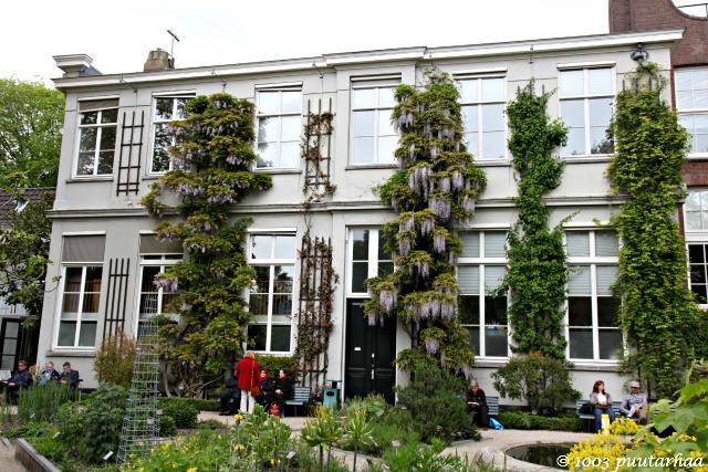 Amsterdamin kasvitieteellinen puutarha