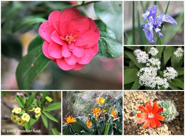 Amsterdamin kasvitieteellinen puutarhan kukat