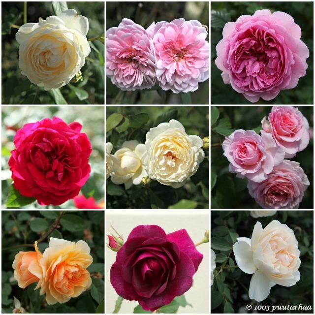 ruusukollaasi
