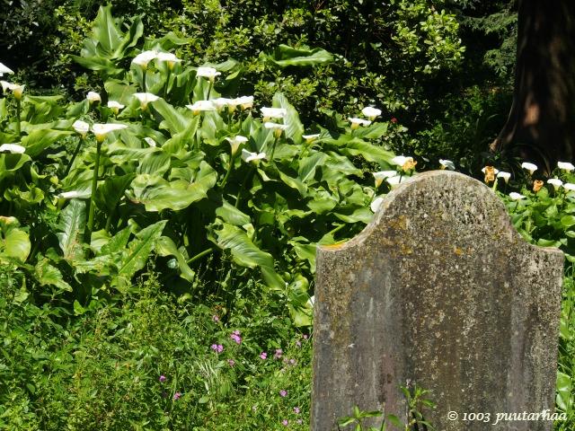 Englantilainen hautausmaa