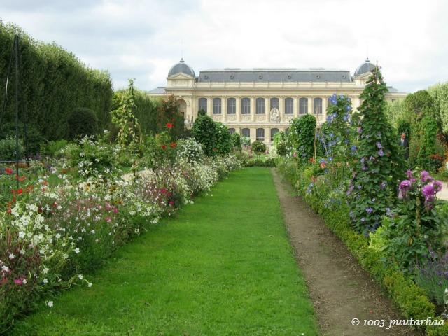 Jardin des Plantesin laajat ja näyttävät kesäkukkaistutukset luonnonhistoriallisen museon edessä