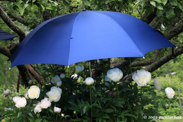 pionien_sateenvarjo